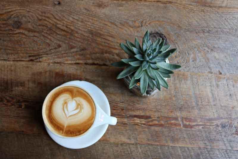 café decorado al lado de una planta
