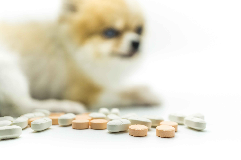 Perro de fondo con pastillas en primer plano
