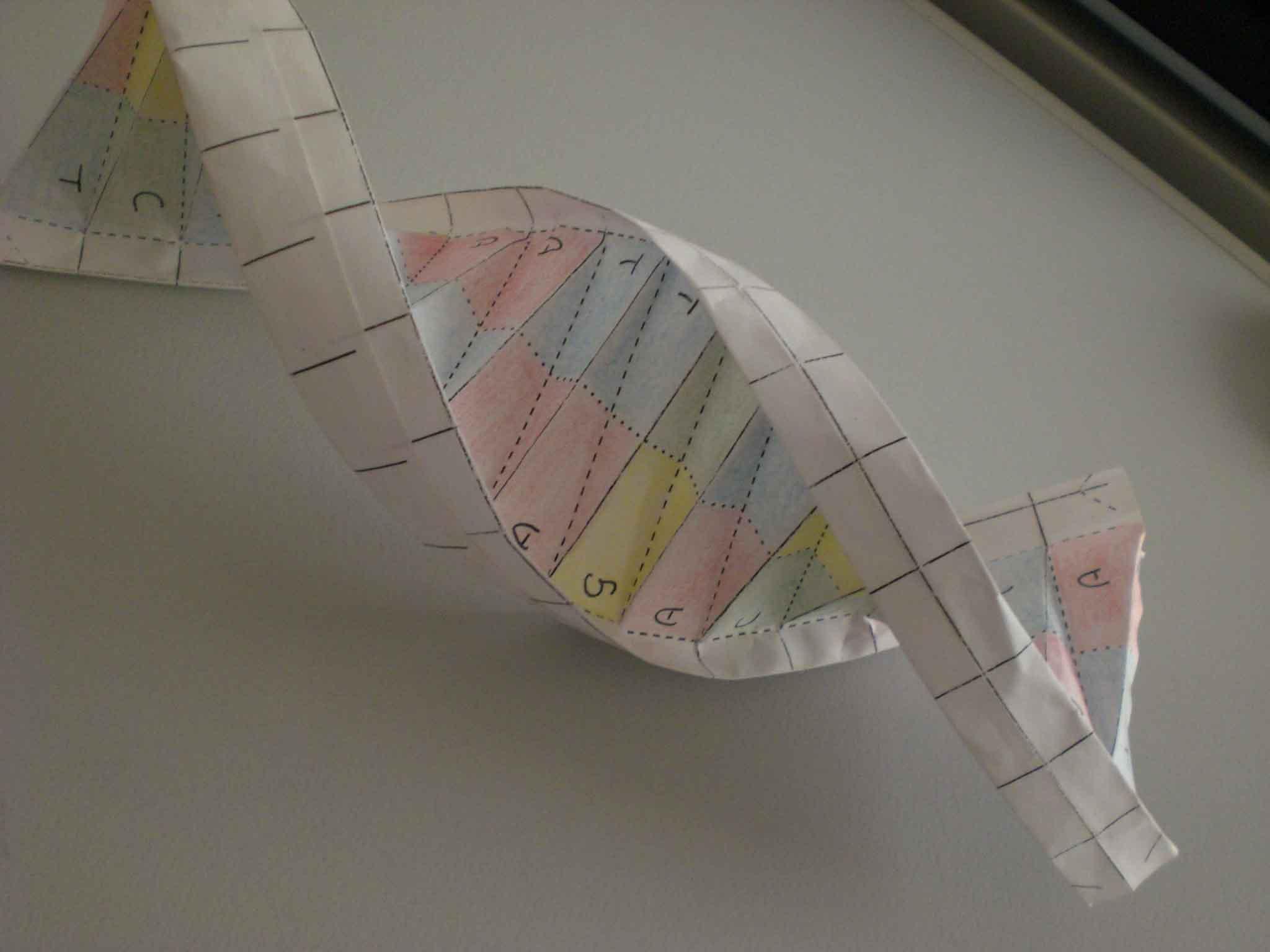 Molécula de ADN hecha en papel