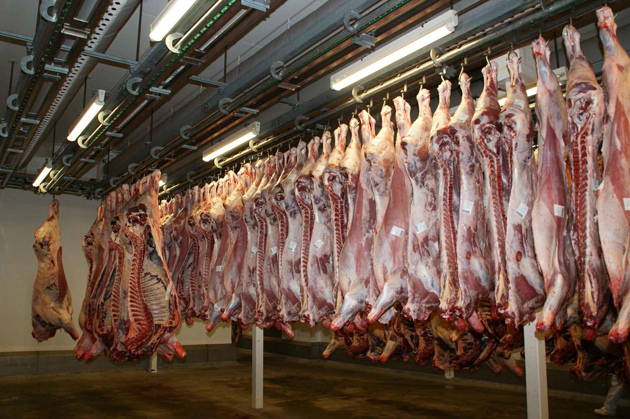 Piezas de carne colgadas en matadero